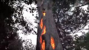 Les flammes consumentcet arbre de Californie (Etats-Unis) de l'intérieur. (YOUTUBE)
