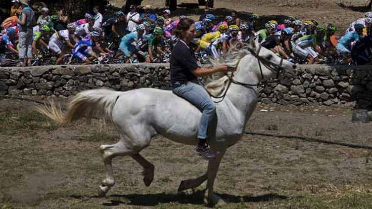 Photo d'illustration d'un cheval. (JEFF PACHOUD / AFP)