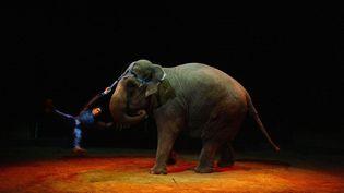 Un acrobate réalise un numéro avec un éléphant dans un cirque installé à Paris, le 26 novembre 2003. (MARTIN BUREAU / AFP)