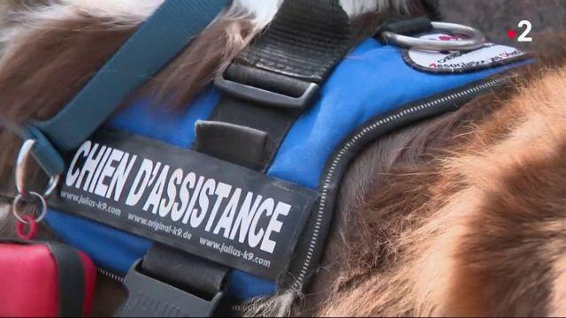 Handicap : des chiens pour accompagner les sourds