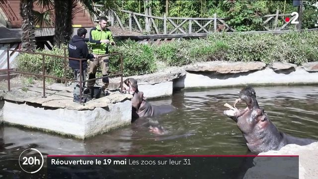 Déconfinement : les zoos se préparent à la réouverture du 19 mai
