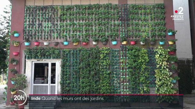 Inde : des jardins verticaux sur les murs grâce aux bouteilles en plastique