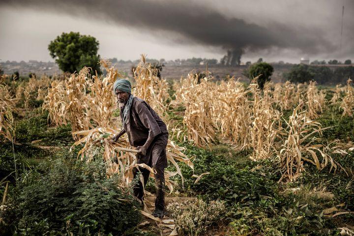 Agriculteur dans l'Etat du Sokoto, dans le nord-ouest du Nigeria, le 22 avril 2019 (LUIS TATO / AFP)