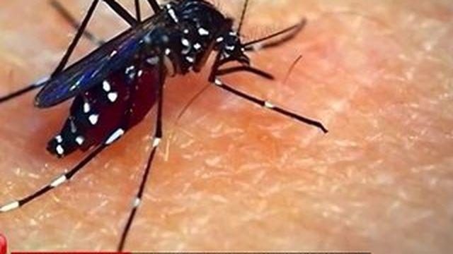 Environnement : la prolifération du moustique tigre