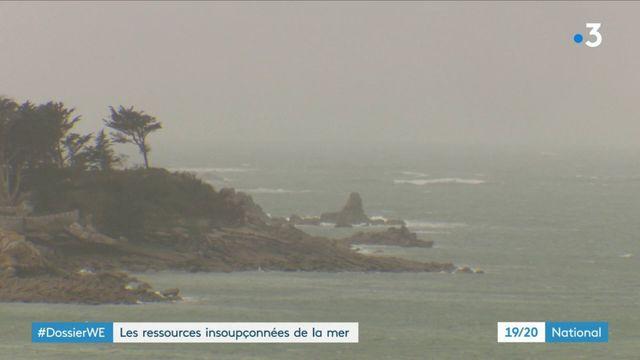 À la découverte des ressources insoupçonnées de la mer