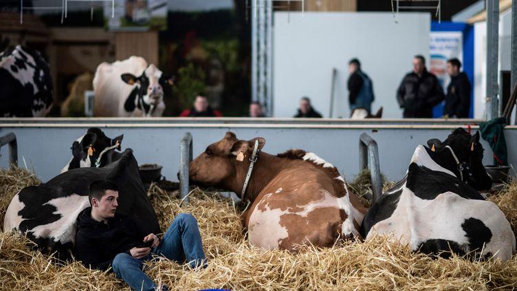 Un agriculteur assis avec ses vaches, lors de la 57e édition du Salon de l'agriculture à Paris, le 21 février 2020. (MARTIN BUREAU / AFP)