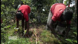 """Comment font les agriculteurs sri-lankais sans glyphosate ? """"Eh bien, on utilise du glyphosate !"""" (ENVOYÉ SPÉCIAL  / FRANCE 2)"""