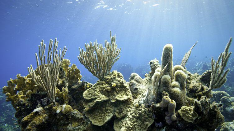 """La fréquence du blanchissement des récifs coralliens s'accélère, selonune étude publiée dans """"Science"""", le 4 janvier 2018. (GETTY IMAGES)"""