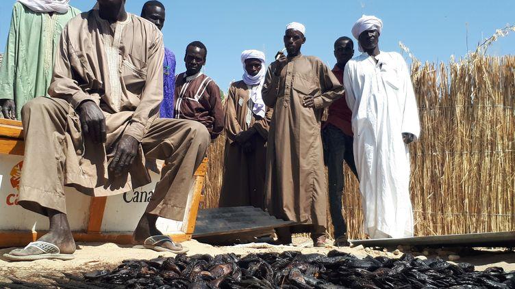 Des hommes de la région du lac Tchad, devant le maigre produit de leur pêche (CLAUDE GUIBAL / RADIO FRANCE)