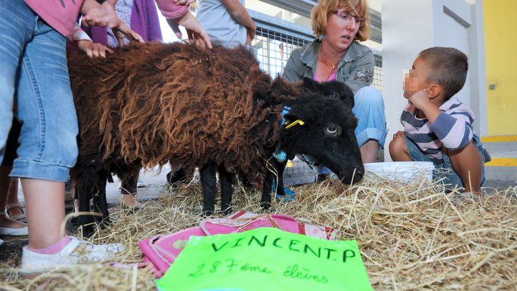 """Un mouton d'Ouessant baptisé """"Vincent P."""", inscrit à l'école Jules-Simon, à Saint-Nazaire (Loire-Atlantique), le 7 septembre 2012. (FRANK PERRY / AFP)"""
