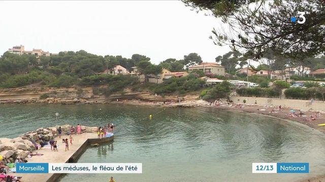 Marseille : gare au retour des méduses