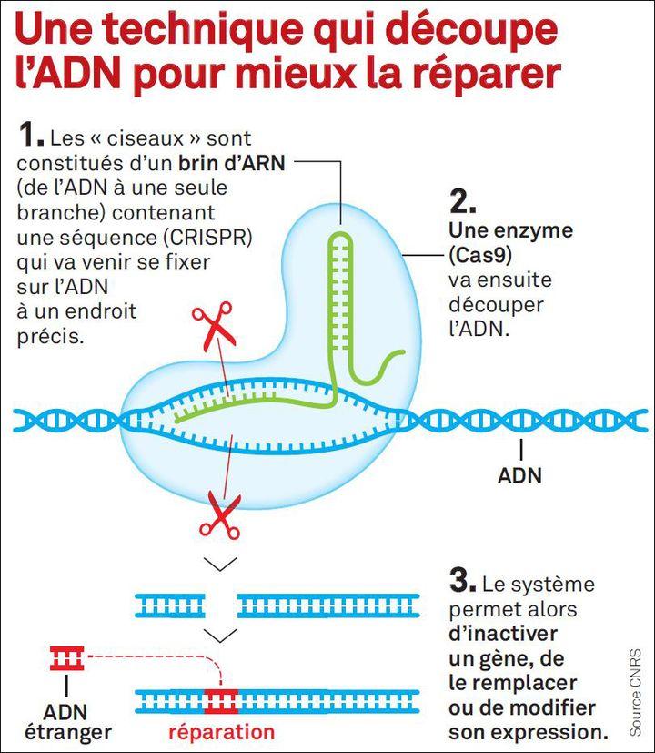 """CRISPR Cas9, le """"couteau suisse de la génétique"""" (Ask Media pour le Parisien magazine)"""