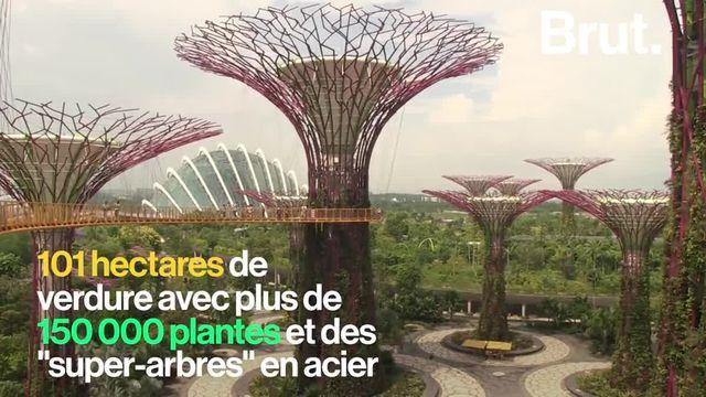 """Surnommée la """"ville jardin"""", Singapour est la métropole la plus verte au monde."""