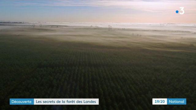 Découverte : les secrets de la forêt des Landes