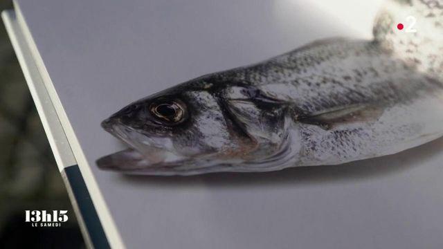 VIDEO. La cuisine 100% marine et durable avec des espèces de saison du chef triplement étoilé Christopher Coutanceau