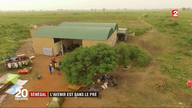 Sénégal : l'avenir est dans le pré