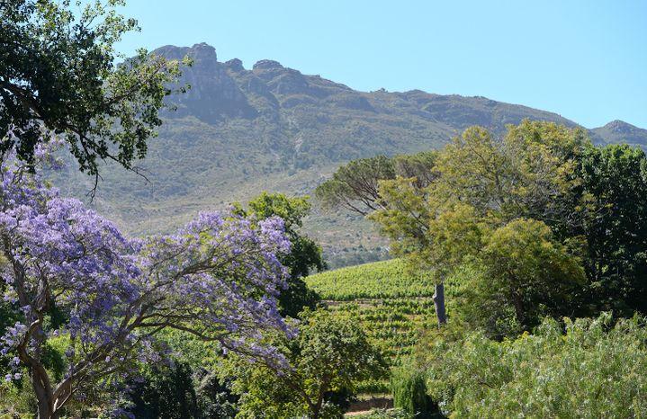 Route des vins de Constantia Valley, Le Ca, Afrique du Sud. (ARTUR WIDAK / NURPHOTO)