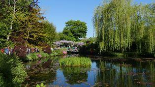 Le jardin d'eau et le célèbre pont japonais ourlé par deux glycines. (ISABELLE MORAND / RADIO FRANCE / FRANCE INFO)