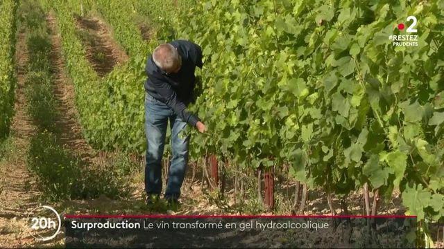 Surproduction : le vin distillé pour fabriquer du gel hydroalcoolique