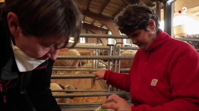 Agriculture : dans l'Isère, Romain Poureau travaille avec des personnes en situation de handicap