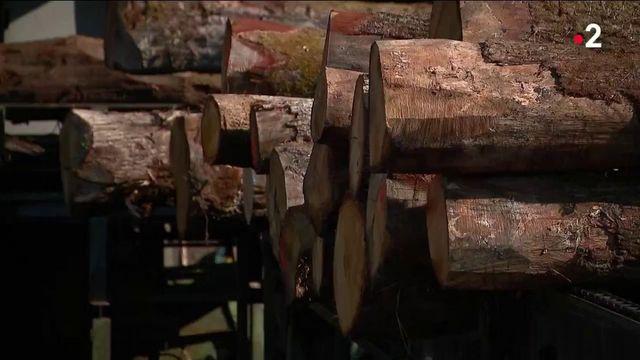 Industrie : la filière du bois s'inquiète pour son avenir face aux exportations