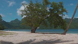 Pour combattre l'érosion des plages sur l'île de Moorea, l'office du tourisme a sélectionné plusieurs variétés de plantes qui seront plantées sur le sable. (France 3)