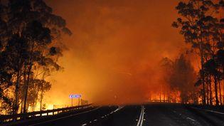 Un incendie fait des ravages le long d'une autoroute, mardi 8 janvier, dans la région de Shoalhaven Heads, en Nouvelle-Galles du Sud(Australie). (NSW RURAL FIRE SERVICE / AFP)