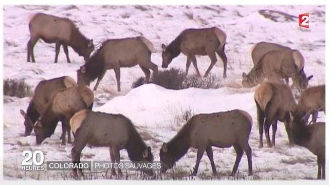 Sur les traces des animaux sauvages du Colorado