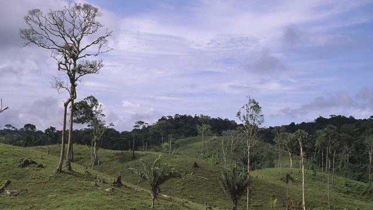 (Les ravages de la déforestation au Panama. © Kevin Schafer/Photoshop/MaxPPP)