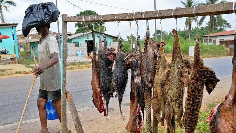 Vente d'animaux sauvages pour la consommation de leur chair près de Bata en Guinée équatoriale. (CARL DE SOUZA / AFP)