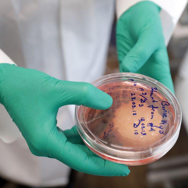 Viande artificielle produite dans le laboratoireOchakov Food Ingredients Plant, à Moscou, en 2019. (VYACHESLAV PROKOFYEV / TASS VIA GETTY IMAGES)