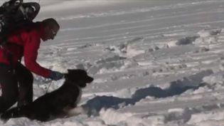 Comme chaque année, l'hiver constitue un risque élevé d'avalanches pour les massifs. En Isère, les jeunes chiens d'avalanches et leurs maîtres restent une priorité. Pendant deux semaines, ils apprennent à sauver rapidement des vies avant de passer un diplôme national. (FRANCE 3)