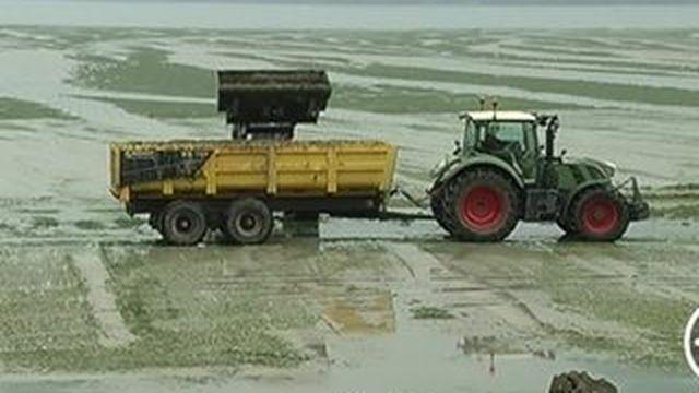 La prolifération des algues vertes inquiète de nouveau en Bretagne