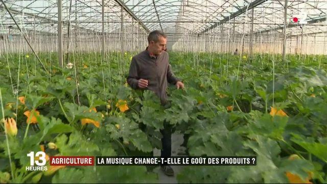 Agriculture : la musique change-t-elle le goût des produits ?