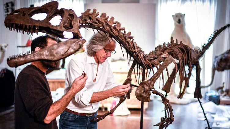 Le squelette d'Allosaurus mis au enchères à Artcurial en novembre 2018 n'a pas trouvé d'acheteur  (STEPHANE DE SAKUTIN / AFP)