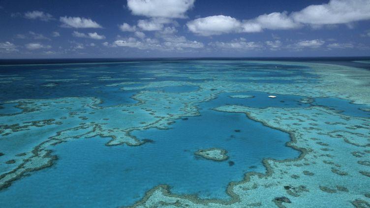 La Grande Barrière de corail, au large de l'Australie, le 7 janvier 2015. (THIERRY GRUN / ONLY WORLD / AFP)