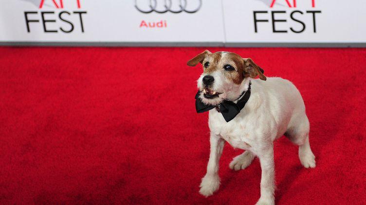 Uggie, le chien star du film The Artist de Michel Hazanavicius, est favori pour remporter le titre de meilleur chien dans un film. (FREDERIC J. BROWN / AFP)
