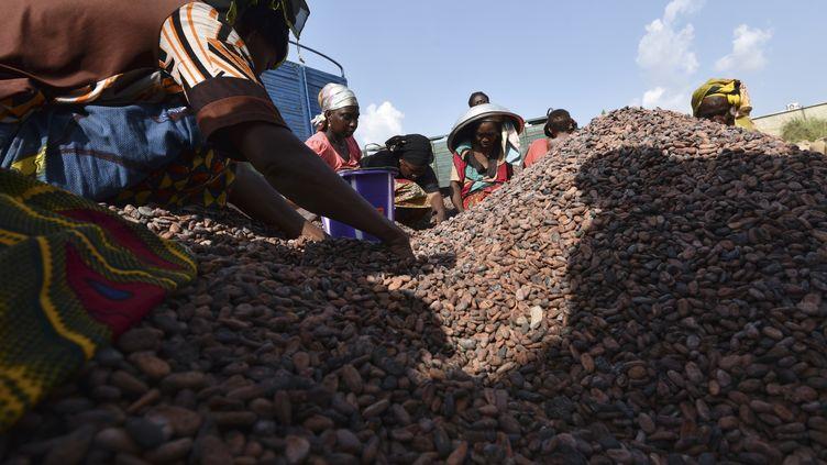 Des travailleurs rassemblent des fèves de cacao, le 6 mars 2017, en Côte d'Ivoire. (SIA KAMBOU / AFP)