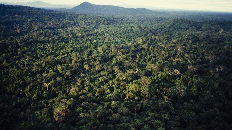 Vue aérienne de la forêt tropicale amazonienne, dans le nord du Brésil, le 15 juin 2017. (BRAZIL PHOTOS / LIGHTROCKET / GETTY IMAGES)