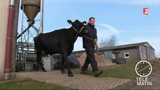 Inespérée, la vache des lycéens de Fontaine-les-Vervins (Aisne) présentée au salon de l'agriculture 2017. (France 2)
