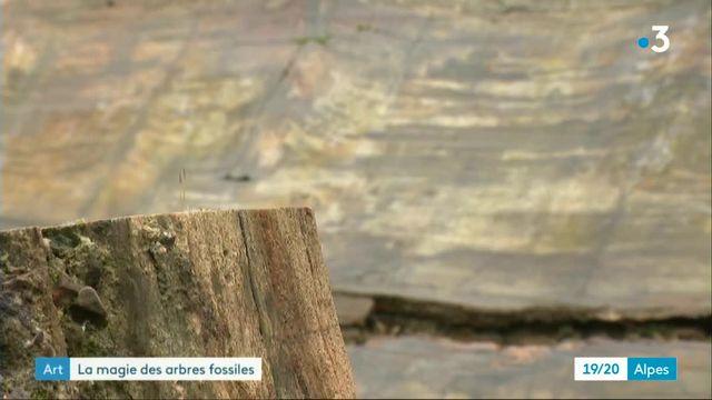 La seconde vie des bois pétrifiés