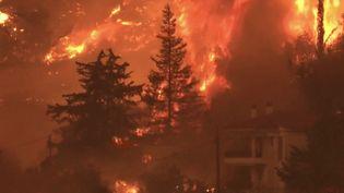 L'île d'Eubée (Grèce) est en proie aux incendies dimanche 8 août. Les pompiers s'activent pour tenterdemaîtriser les flammes et misent notamment sur plusieurs renforts venus de l'étranger. (FRANCEINFO)
