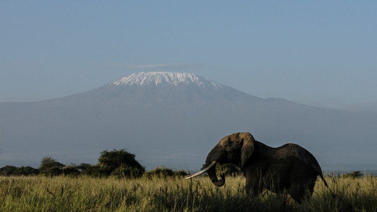 Un éléphant sur fond de Kilimandjaro, une carte postale peut-être menacée. (YASUYOSHI CHIBA / AFP)