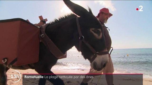 Var : à Ramatuelle, des ânes aident à nettoyer la plage
