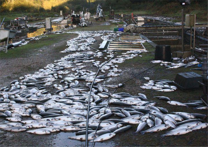 La pisciculture de Gérard, le 24 octobre 2010 dans le Finistère. (MAXPPP)