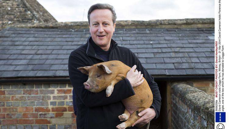 Le Premier ministre, David Cameron, avec un cochon, le 21 mars 2014 à Witney, près d'Oxford(Royaume-Uni). (DAVID HARTLEY / SIPA)