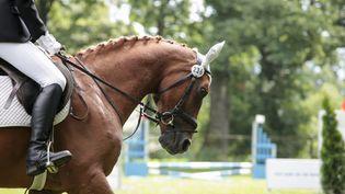 Flogas, un cheval âgé de 10 ans, est mort lundi 10 octobre lors d'un concours équestre à Cagnes-sur-Mer (Alpes-Maritimes).  (STEFANIE GREWEL / CULTURA RF / GETTY IMAGES)