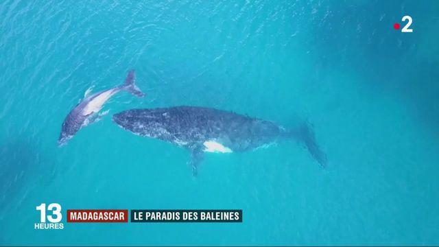 L'Île Sainte-Marie : le paradis des baleines
