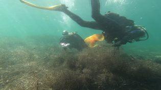 Deux plongeurs bénévolesexplorent les fonds marins pour enlever les déchets rencontrés. (France 3 Antibes)