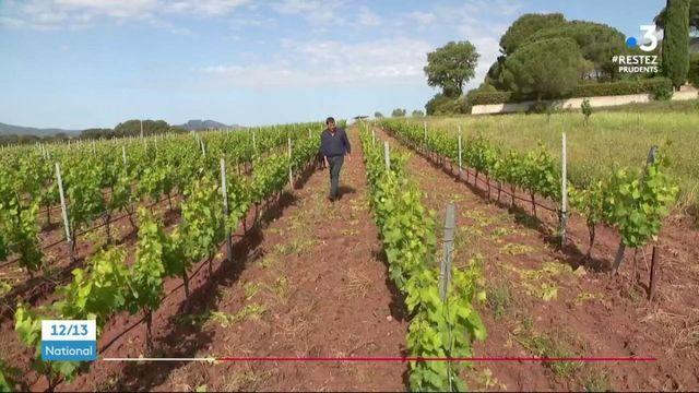 Déconfinement : la production de vin rosé au ralenti
